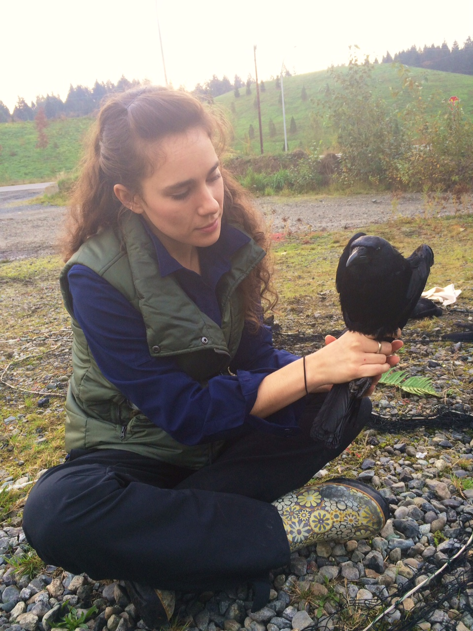 corvid research school of environmental and forest resources 2813