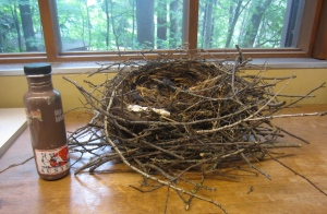 A typical looking crow nest with a water bottle for scale.