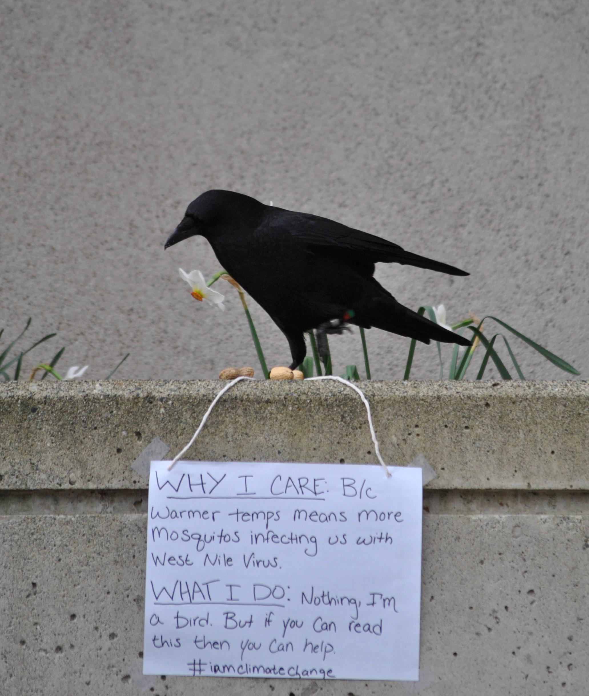 Crow Disease