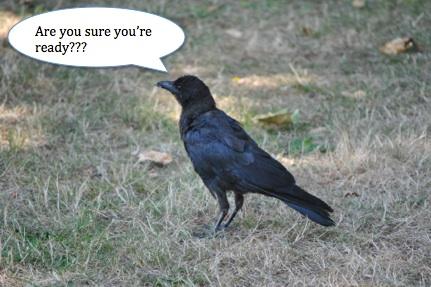 ready crow