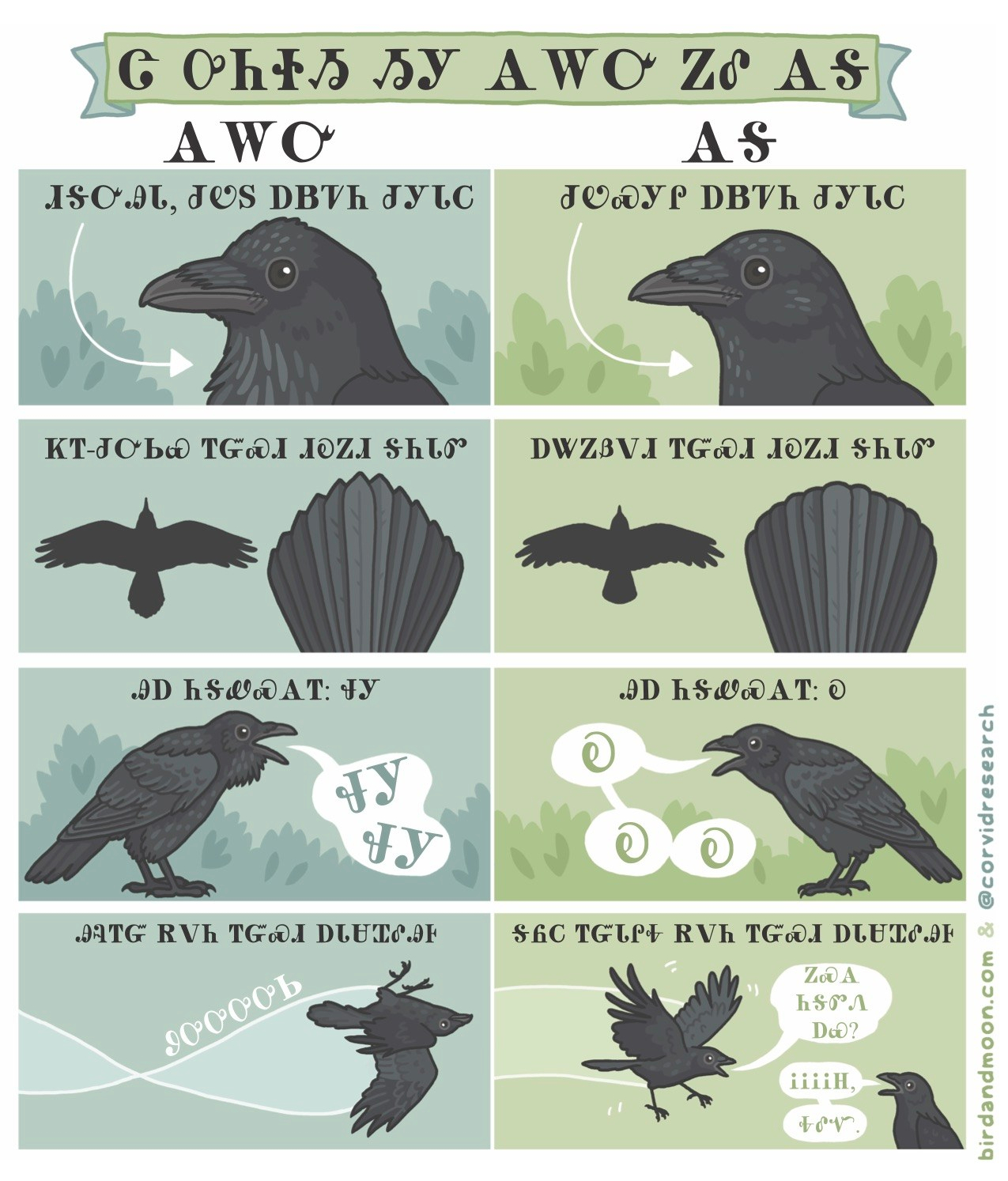 raven vs crow Cherokee